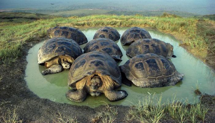 Korytnačí ostrov, Galapágy