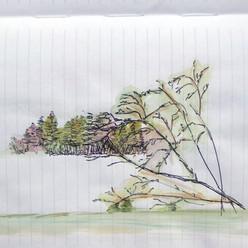 Martha Sketch
