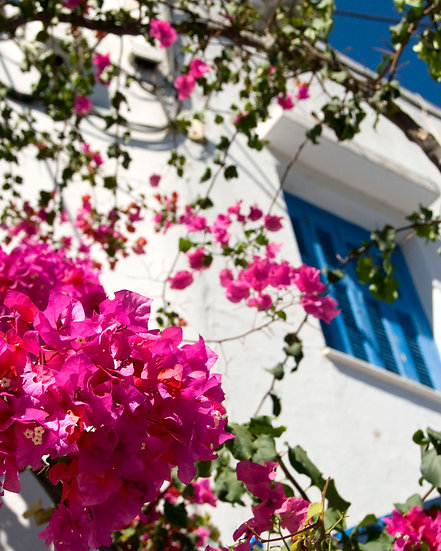 Greece Flowers