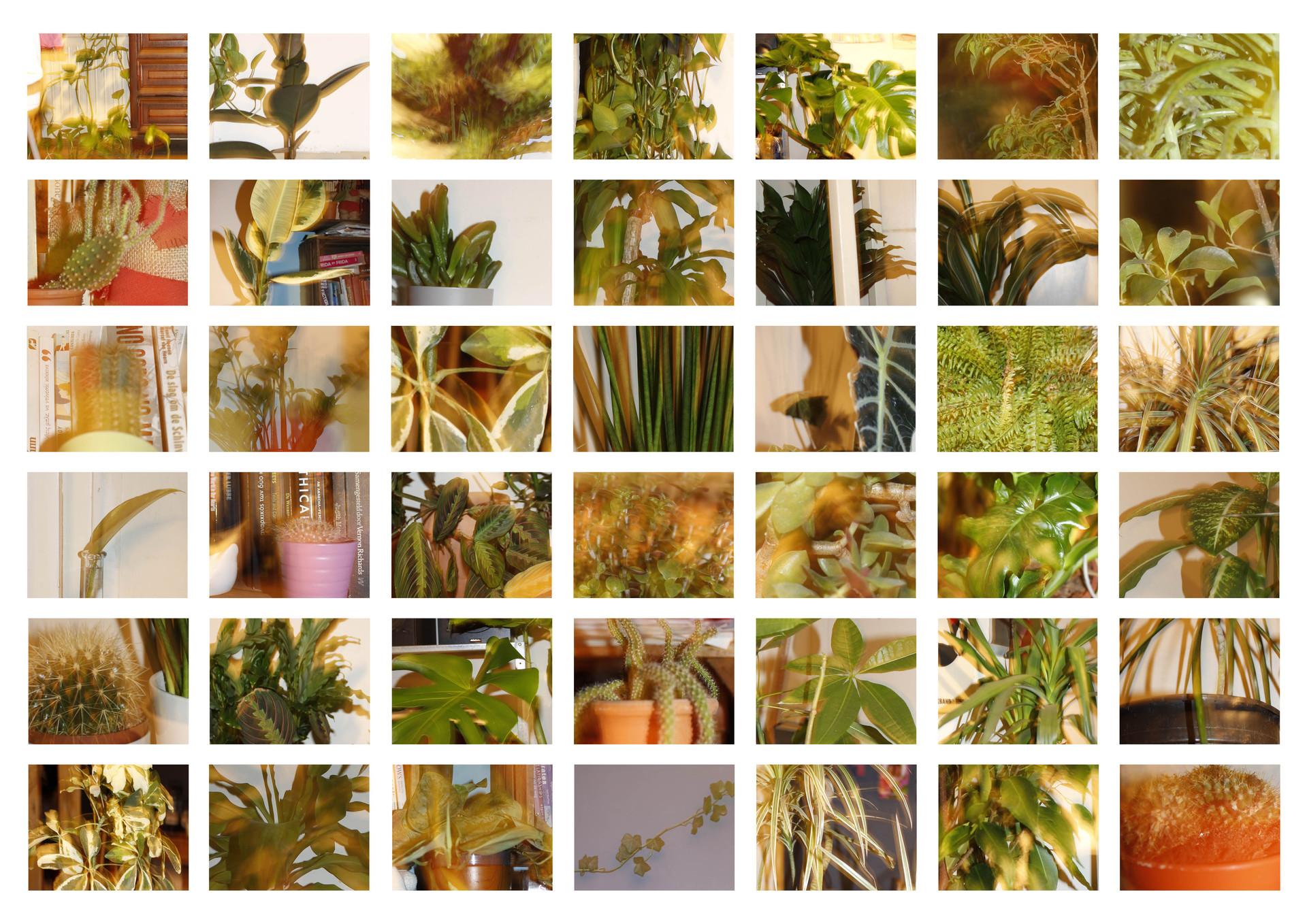 ducumentation plant portraits.jpg