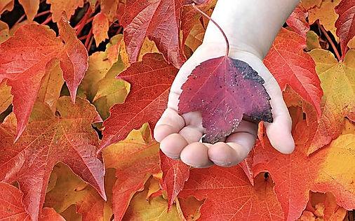 fall-3825996__340.jpg