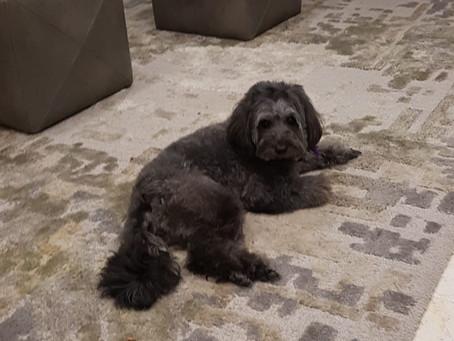 Meet our Dog Chloe, Truthfully I didn't want a dog- ever!