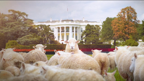 SHEEP ON THE WHITE HOUSE LAWN?