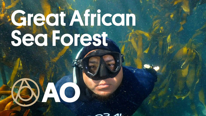 ATLAS OBSCURA - South Africa's Kelp Forest