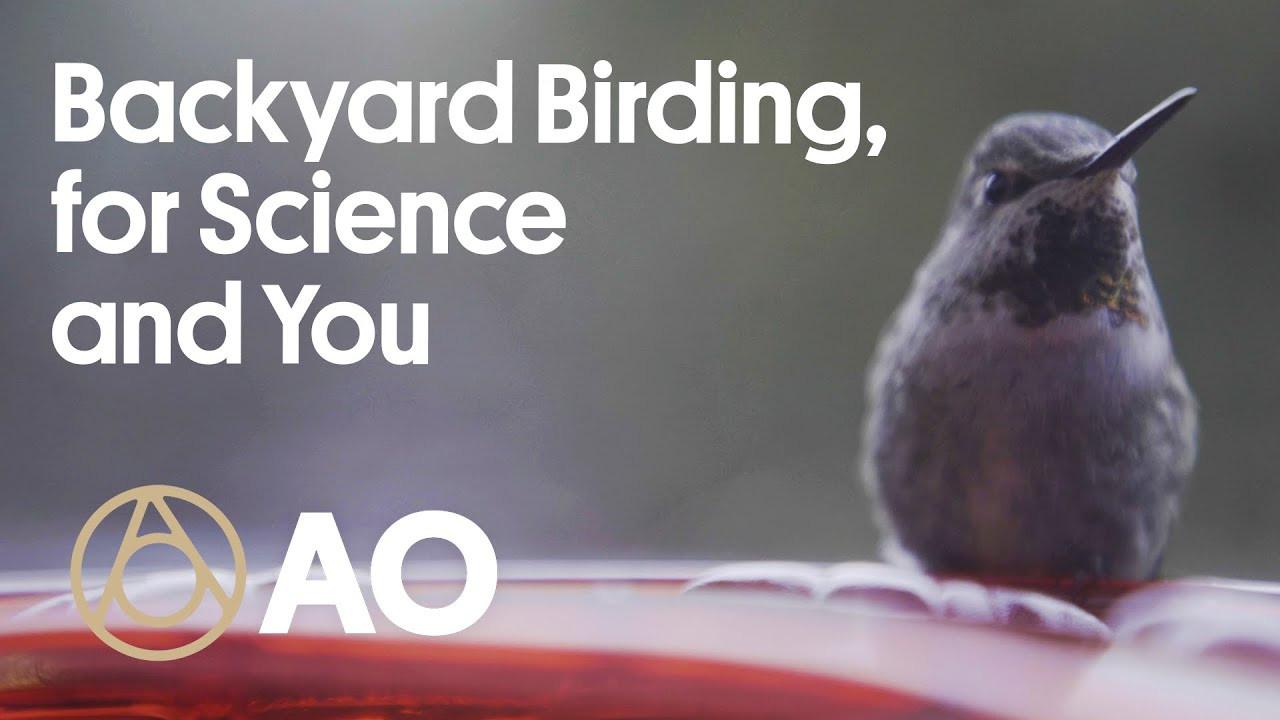 ATLAS OBSCURA - Rufous Hummingbird