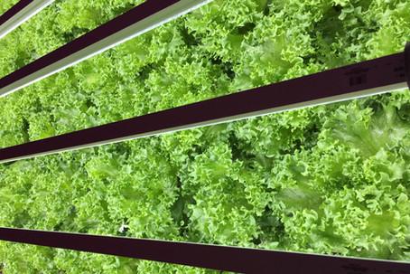 野菜は植物工場でつくる時代