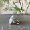 Thumbnail: Bramble ring
