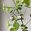 Thumbnail: Geranium hoops