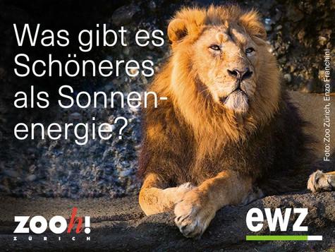 Ermässigte Zooeintritte mit EWZ