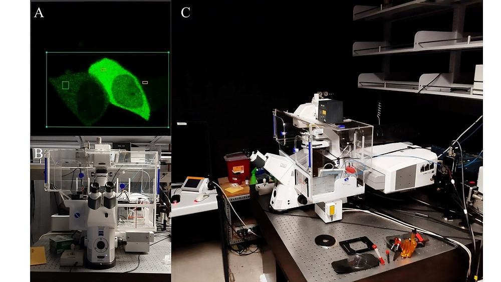 Microscopio confocal para observar fluorescencia en células. A) Ejemplo de células expresando una proteína fluorescente verde (GFP), este color es observado después de excitar/enfocar con un láser a las células que contienen la proteína. B) Imagen frontal y C) lateral de un microscopio confocal Zeiss LSM710 en el Laboratory for Fluorescence Dynamics, las células que se pretenden observar son colocadas dentro de la caja transparente en el microscopio que funciona como una incubadora para mantener en condiciones apropiadas a las células.