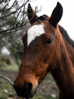 2019-05-21_Peru horse.jpg