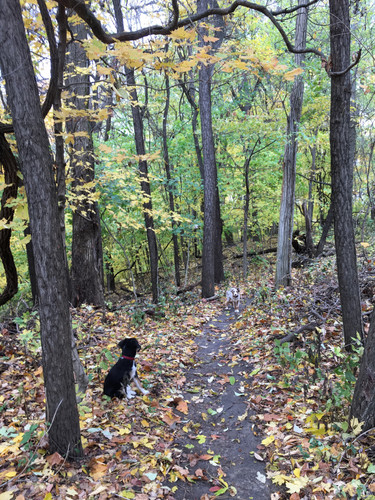 forest bathing pups