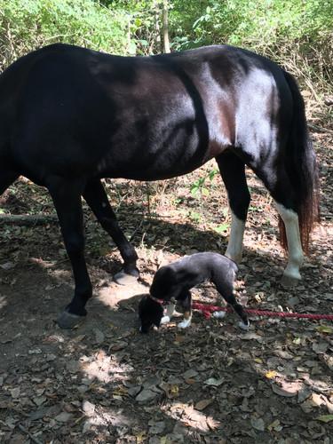 Maggie and puppy Austin