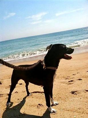 Black dog on beach walk Rodanthe NC