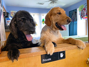 Dogs in pet resort office Hatteras Island Pet Care