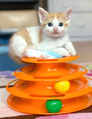 Kitten playing in cat boarding room