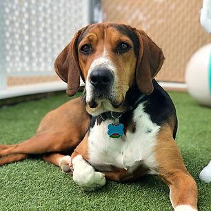 Hound dog basking in sunshine doggie daycare boarding