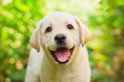 Puppy 101