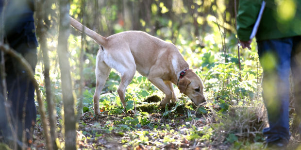 Forest Fido