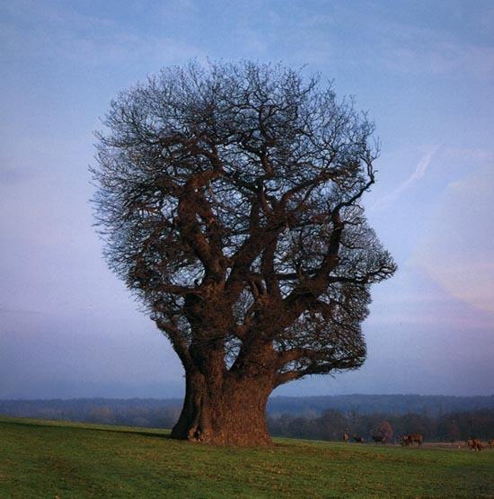 Jak trening uważności zmienia mózg?