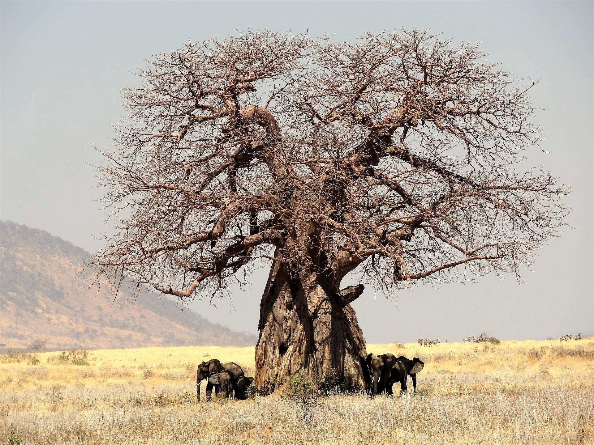 africa-1979226_1920.jpg
