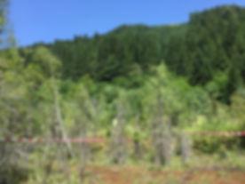 H23 Blackwater Forest 04.JPG