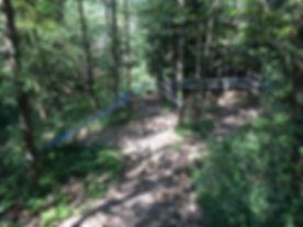 H33 Shadow Forest 02.JPG