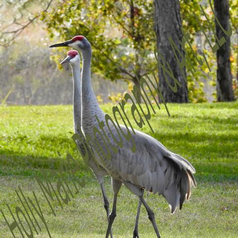 Crane Couple
