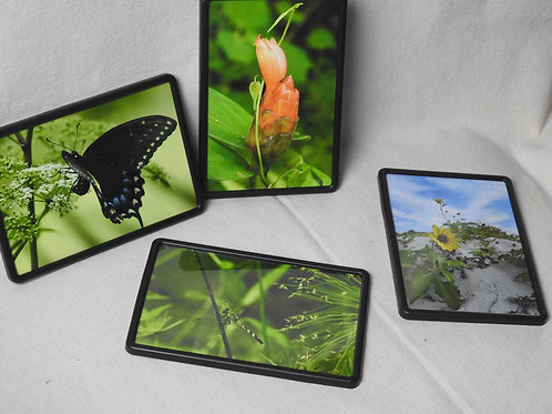 Framed Magnets - Various subjects in nature, butterfly, flower, dragonfly, beach