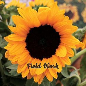 Field%20Work_edited.jpg