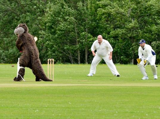 Cricket_2013_045.jpg