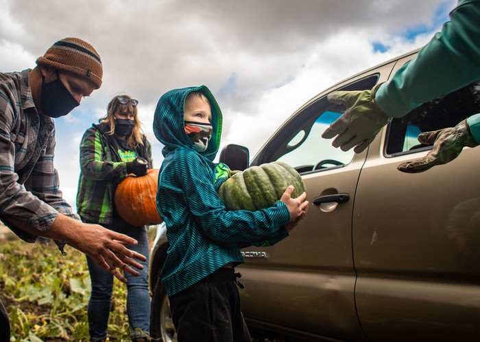 """Teddy Nichols, 7, helps load a pumpkin into a truck at the """"Pumpkins for the Pov"""" Pumpkin Harvest on Sept. 26, 2020. The harvest, an annual event, brought about 25 volunteers together to pull nearly 2,000 pumpkins out of a field near Evans Tree Farm on Mullan Road. The pumpkins will be sold at around town to benefit the Poverello Center."""