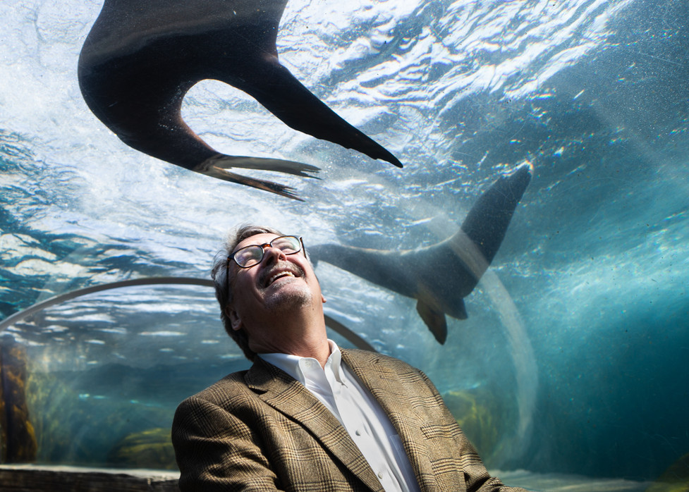 St. Louis Zoo President and CEO, Dr. Jeffrey Bonner, smiles as sea lions swim overhead in The Holekamp Aqua Tunnel below the zoo's Sea Lion Sound on March 22, 2021. Bonner announced his retirement at the end of the year after leading the organization for 19 years. He was instrumental in many of the zoo's modernizations, including the polar and grizzly bear exhibits, the Elephant Woods and the Sea Lion Sound.