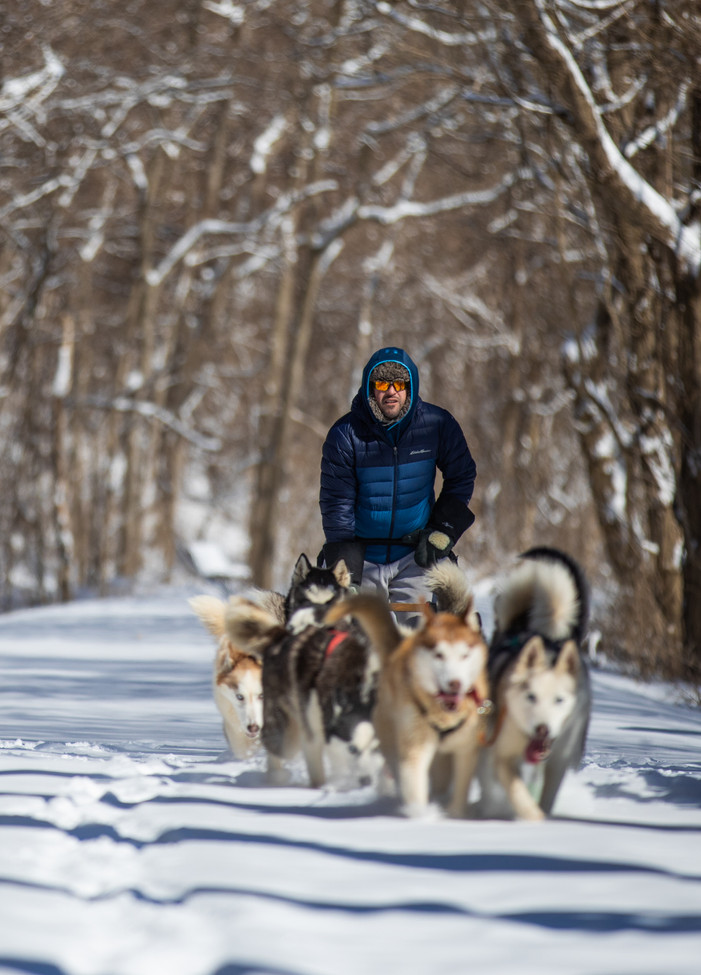 Richie Camden's sled dog team break trail through the snow on the Katy Trail. Breaking through fresh powder is an extra workout for the dogs, and good practice for snowy races.
