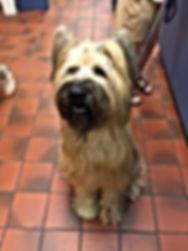 Tritt Animal Hospital 4349 Shallowford Rd Marietta GA