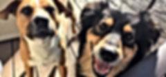 Happy dogs Tritt Animal Hospital 30062