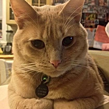 Orange cat Tritt Animal Hospital_edited.