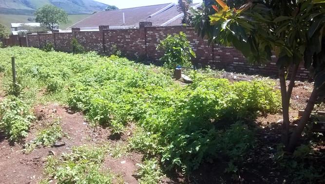 Der Garten gedeiht prächtig