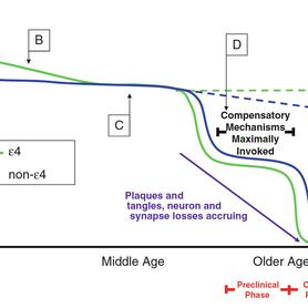 The Apolipoprotein E Antagonistic Pleiotropy Hypothesis