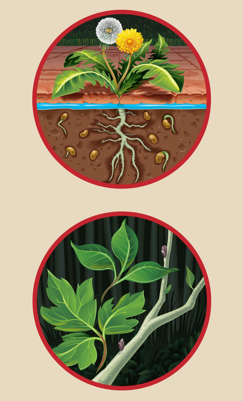 BioAdvanced Label Illustrations