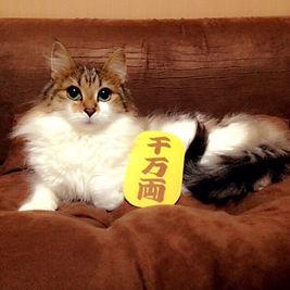 静岡市 犬のしつけ教室 看板猫