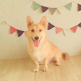 静岡市 犬のしつけ教室 看板犬