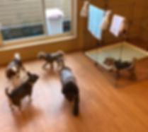 静岡市 犬の幼稚園