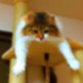 静岡市 ペットホテル 猫