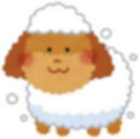 静岡市 ペットホテル シャンプー