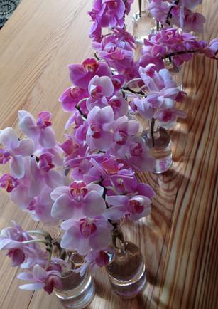 petít orchids