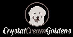 White English Cream Golden Retriever Puppies for Sale