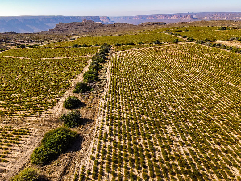 Rooibos Lands Drone Shot Cape Natural Tea Products (1).jpg