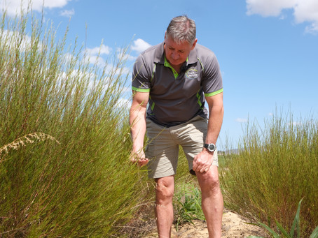 Ensuring a bright future for Rooibos through sustainability