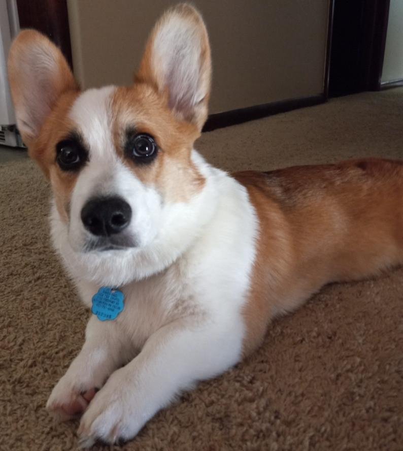 Photo of the author's dog Waffles.